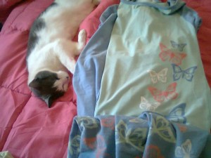 cat and pj's on bed